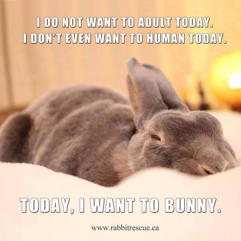 Cannot Human Today I Want to Bunny