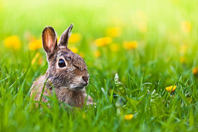 Flickr Benson Kua Late for Easter